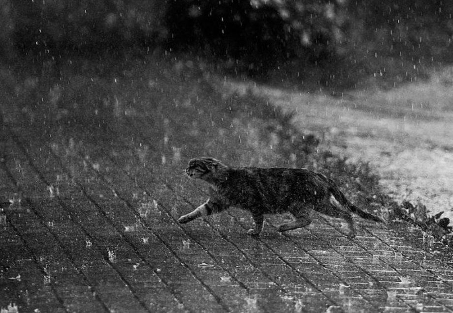 review on cat in the rain Cat in the rain in the short story ,writen by e hemingway, cat in the rain , the main character george' s wife sees a cat in the rain from the window of the room she wants to bring the cat to the room but his husband is indifferent to her request and continues to read his newspaper.